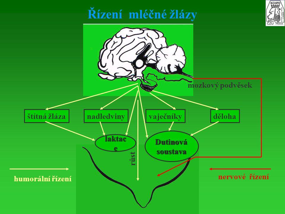 Řízení mléčné žlázy štítná žlázanadledvinyvaječníkyděloha laktac e Dutinovásoustava humorální řízení nervové řízení mozkový podvěsek růst