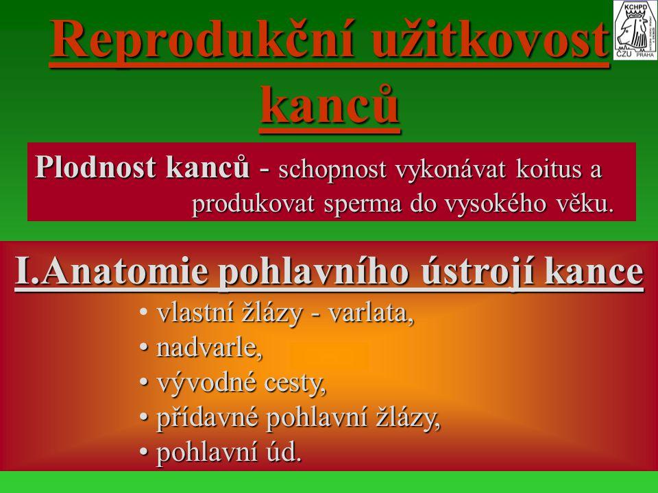 Reprodukční užitkovost kanců I.Anatomie pohlavního ústrojí kance vlastní žlázy - varlata, nadvarle, nadvarle, vývodné cesty, vývodné cesty, přídavné p