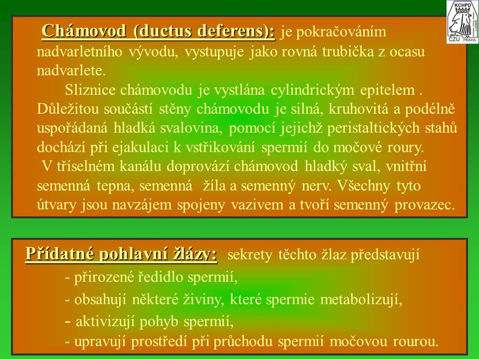 Chámovod (ductus deferens): Chámovod (ductus deferens): je pokračováním nadvarletního vývodu, vystupuje jako rovná trubička z ocasu nadvarlete. Slizni