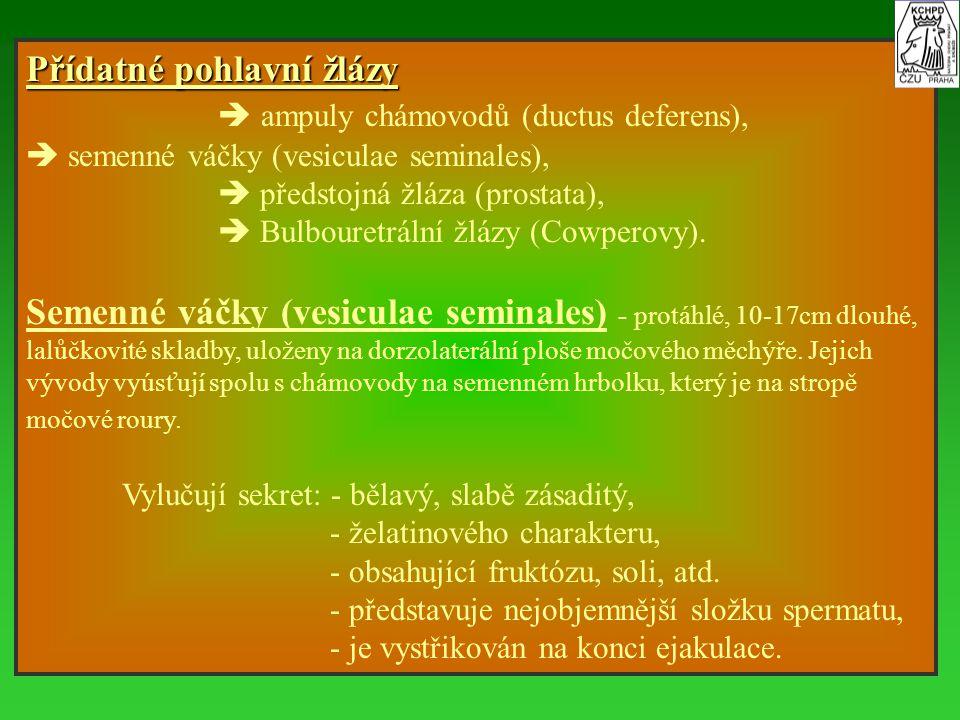 Přídatné pohlavní žlázy  ampuly chámovodů (ductus deferens),  semenné váčky (vesiculae seminales),  předstojná žláza (prostata),  Bulbouretrální ž