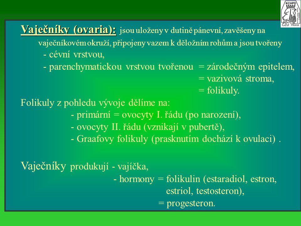 III. Pohlavní cyklus prasnice 1. 1. proestrus, 2. estrus, 3. poestrus, 4. metestrus, 5. diestrus.