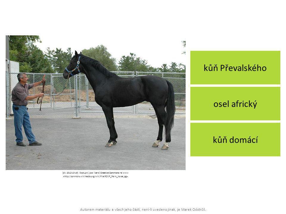 Autorem materiálu a všech jeho částí, není-li uvedeno jinak, je Marek Odstrčil. kůň Převalského kůň domácí osel africký [cit. 2012-10-19]. Dostupný po