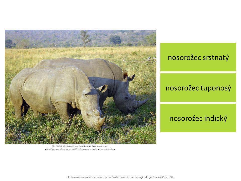 Autorem materiálu a všech jeho částí, není-li uvedeno jinak, je Marek Odstrčil. nosorožec srstnatý nosorožec indický nosorožec tuponosý [cit. 2012-10-