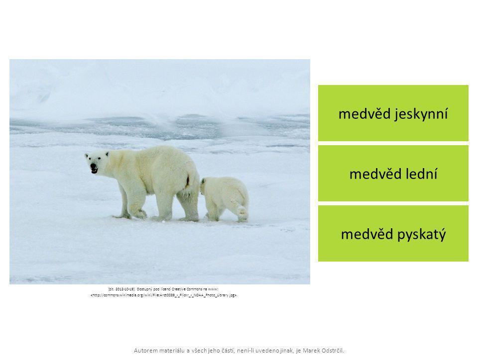 Autorem materiálu a všech jeho částí, není-li uvedeno jinak, je Marek Odstrčil. medvěd jeskynní medvěd lední medvěd pyskatý [cit. 2012-10-19]. Dostupn