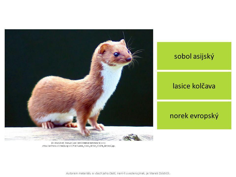 Autorem materiálu a všech jeho částí, není-li uvedeno jinak, je Marek Odstrčil. sobol asijský norek evropský lasice kolčava [cit. 2012-10-19]. Dostupn