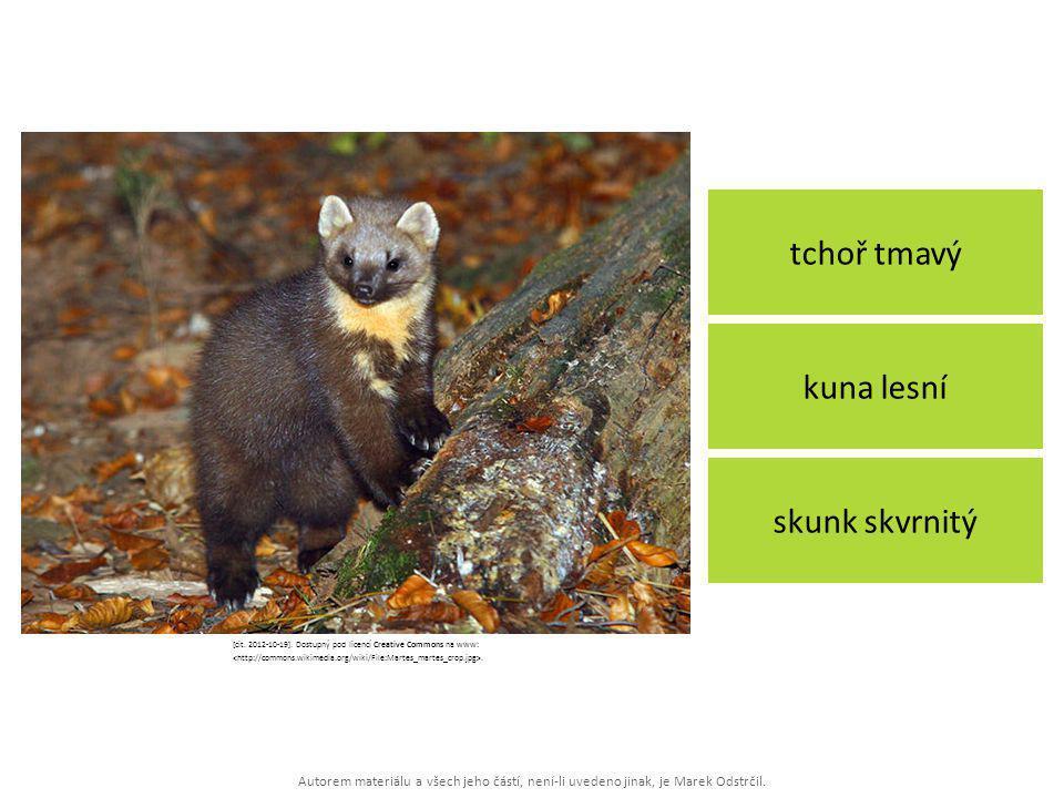 Autorem materiálu a všech jeho částí, není-li uvedeno jinak, je Marek Odstrčil. tchoř tmavý skunk skvrnitý kuna lesní [cit. 2012-10-19]. Dostupný pod