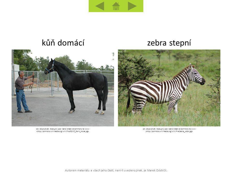 Autorem materiálu a všech jeho částí, není-li uvedeno jinak, je Marek Odstrčil. zebra stepníkůň domácí [cit. 2012-10-19]. Dostupný pod licencí Creativ