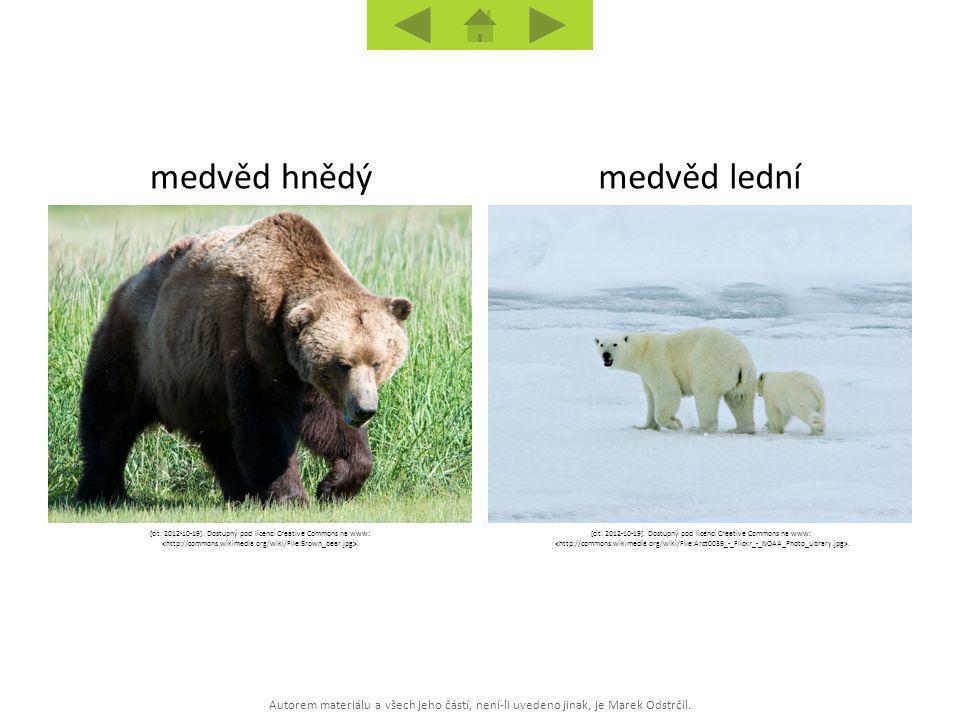 Autorem materiálu a všech jeho částí, není-li uvedeno jinak, je Marek Odstrčil. medvěd lednímedvěd hnědý [cit. 2012-10-19]. Dostupný pod licencí Creat