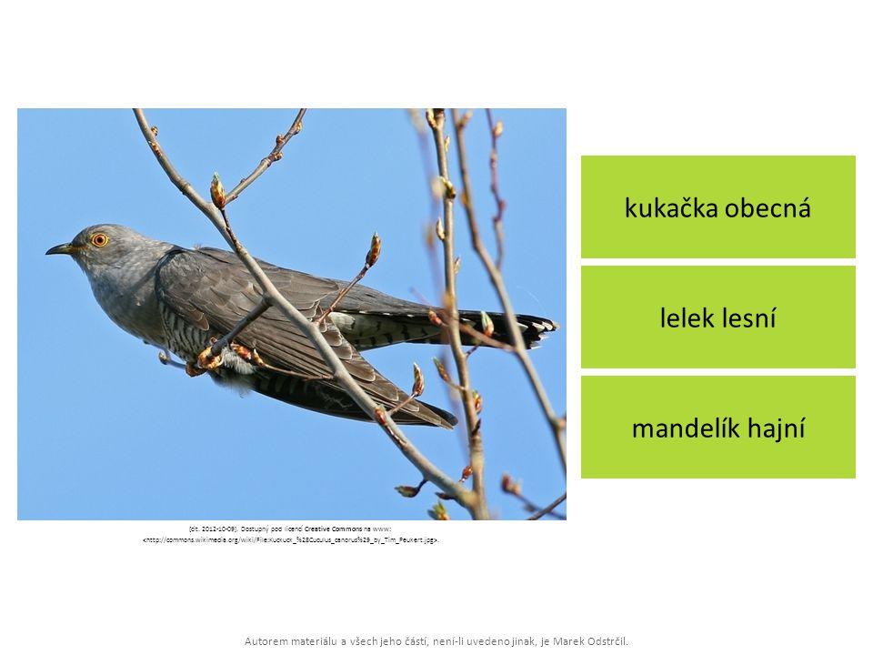 Autorem materiálu a všech jeho částí, není-li uvedeno jinak, je Marek Odstrčil. kukačka obecná mandelík hajní lelek lesní [cit. 2012-10-09]. Dostupný