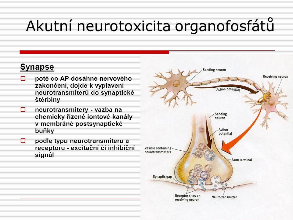 Akutní neurotoxicita organofosfátů Synapse  poté co AP dosáhne nervového zakončení, dojde k vyplavení neurotransmiterů do synaptické štěrbiny  neurotransmitery - vazba na chemicky řízené iontové kanály v membráně postsynaptické buňky  podle typu neurotransmiteru a receptoru - excitační či inhibiční signál