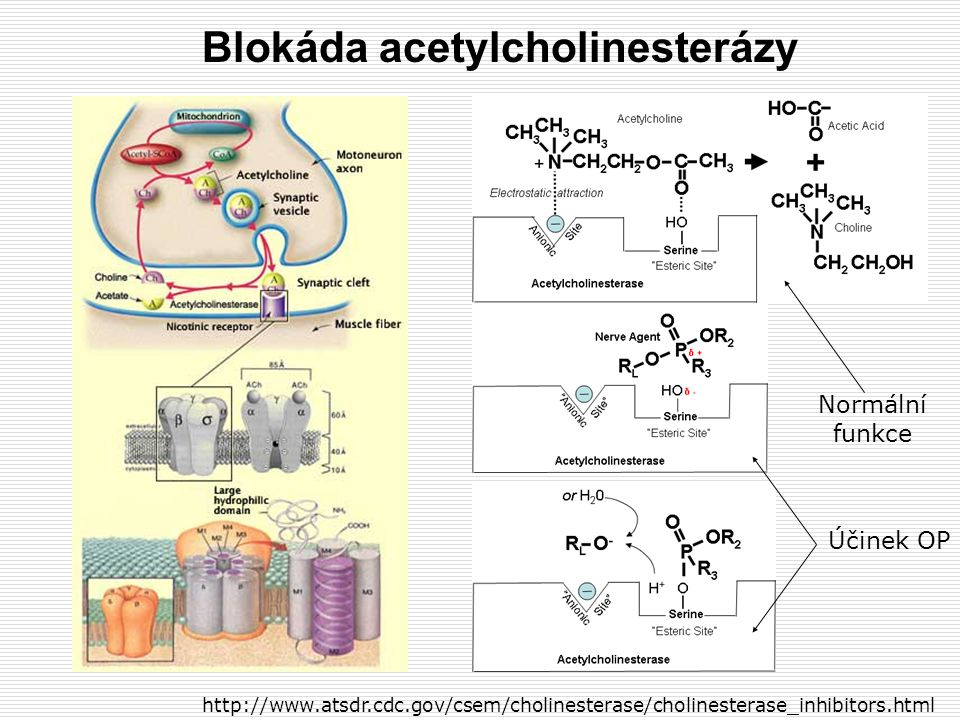 Blokáda acetylcholinesterázy http://www.atsdr.cdc.gov/csem/cholinesterase/cholinesterase_inhibitors.html Normální funkce Účinek OP