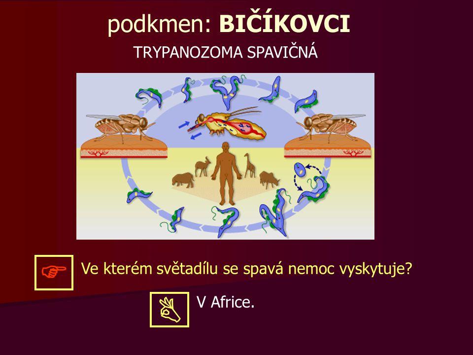 podkmen: BIČÍKOVCI TRYPANOZOMA SPAVIČNÁ Ve kterém světadílu se spavá nemoc vyskytuje?  V Africe. 