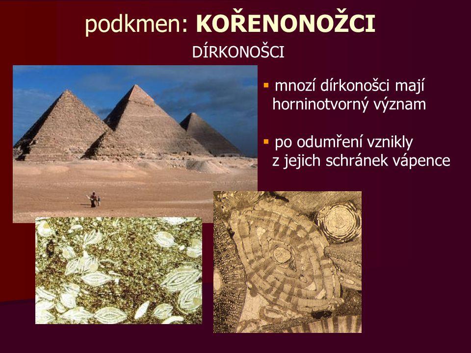 podkmen: KOŘENONOŽCI DÍRKONOŠCI  mnozí dírkonošci mají horninotvorný význam  po odumření vznikly z jejich schránek vápence