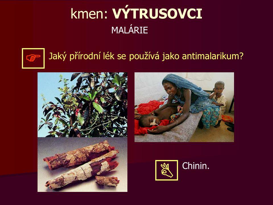 MALÁRIE kmen: VÝTRUSOVCI Jaký přírodní lék se používá jako antimalarikum?  Chinin. 