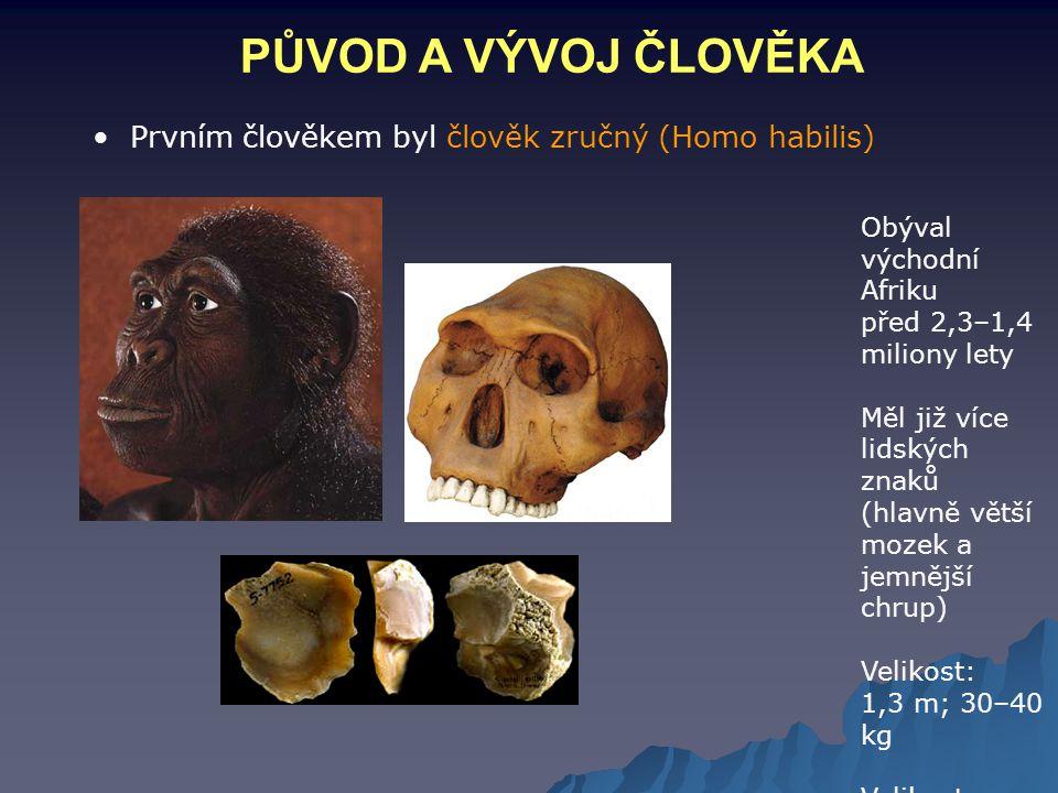 PŮVOD A VÝVOJ ČLOVĚKA Prvním člověkem byl člověk zručný (Homo habilis) Obýval východní Afriku před 2,3–1,4 miliony lety Měl již více lidských znaků (h