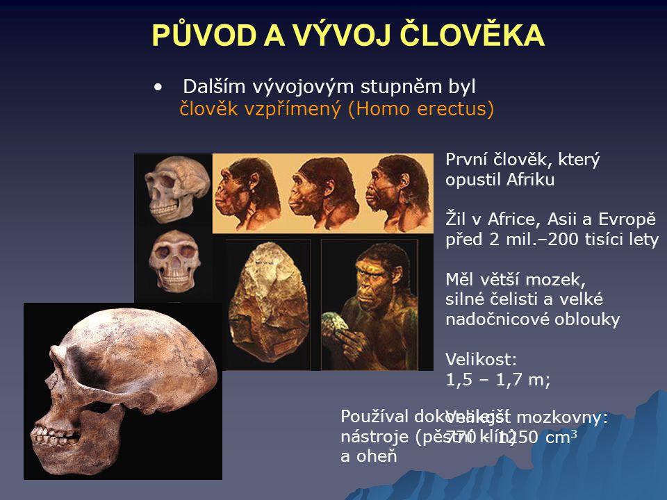 PŮVOD A VÝVOJ ČLOVĚKA Dalším vývojovým stupněm byl člověk vzpřímený (Homo erectus) První člověk, který opustil Afriku Žil v Africe, Asii a Evropě před