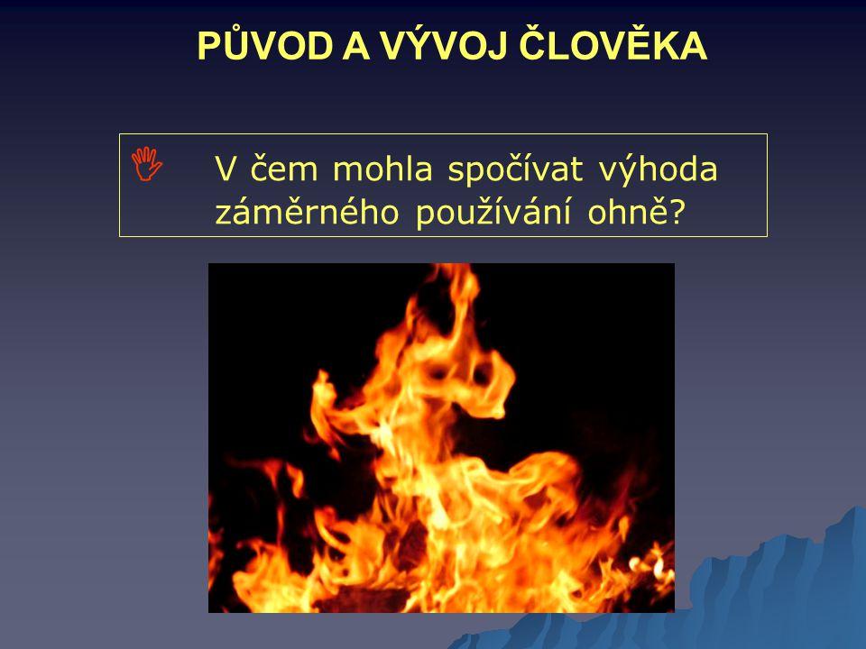 PŮVOD A VÝVOJ ČLOVĚKA  V čem mohla spočívat výhoda záměrného používání ohně?