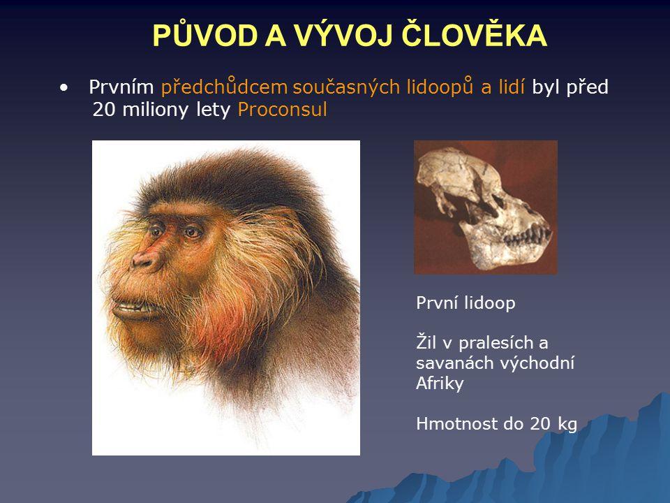 PŮVOD A VÝVOJ ČLOVĚKA Prvním předchůdcem současných lidoopů a lidí byl před 20 miliony lety Proconsul První lidoop Žil v pralesích a savanách východní