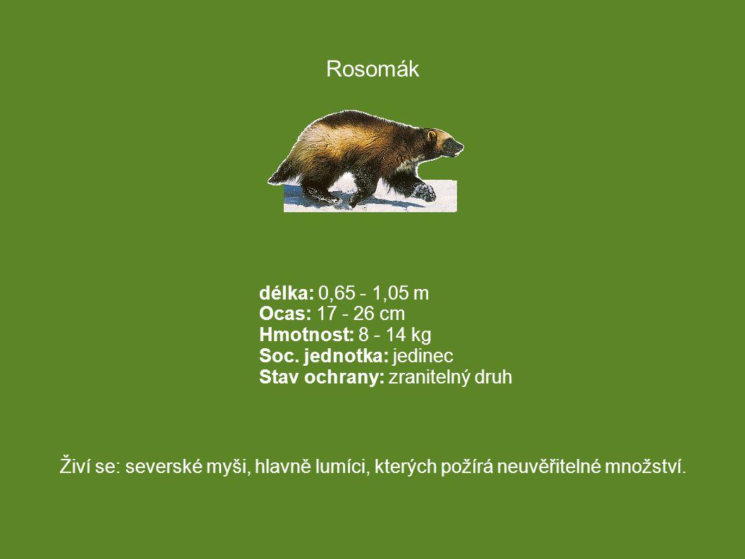 délka: 0,65 - 1,05 m Ocas: 17 - 26 cm Hmotnost: 8 - 14 kg Soc. jednotka: jedinec Stav ochrany: zranitelný druh Živí se: severské myši, hlavně lumíci,