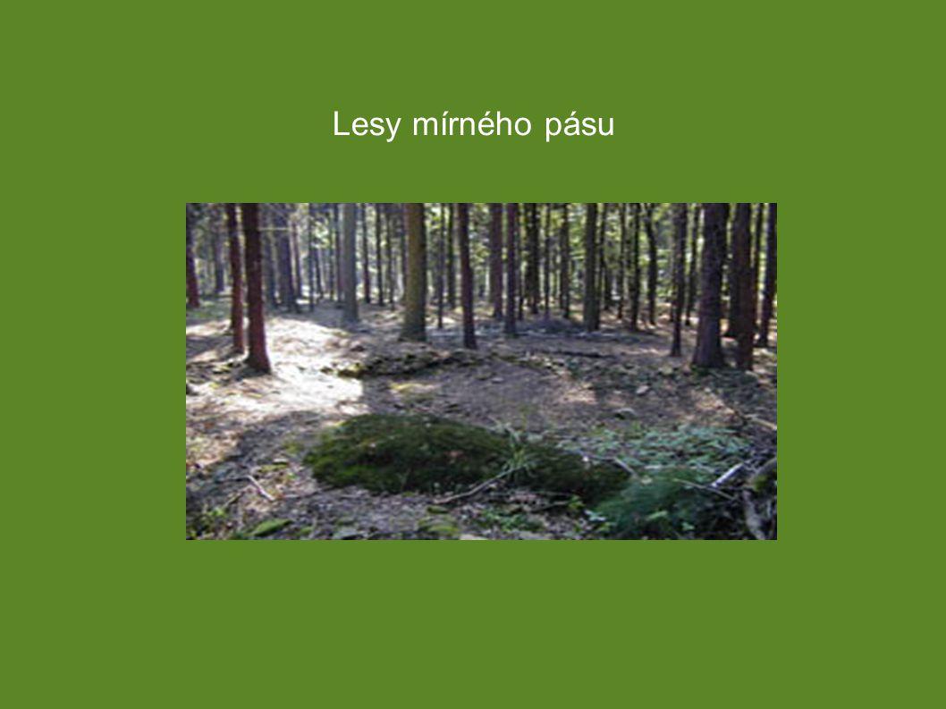 Lesy mírného pásu Lesy dělíme na: ➔ Listnaté (dub, buk, bříza) ➔ Jehličnaté (smrk, modřín, borovice, jedle) ➔ Smíšené