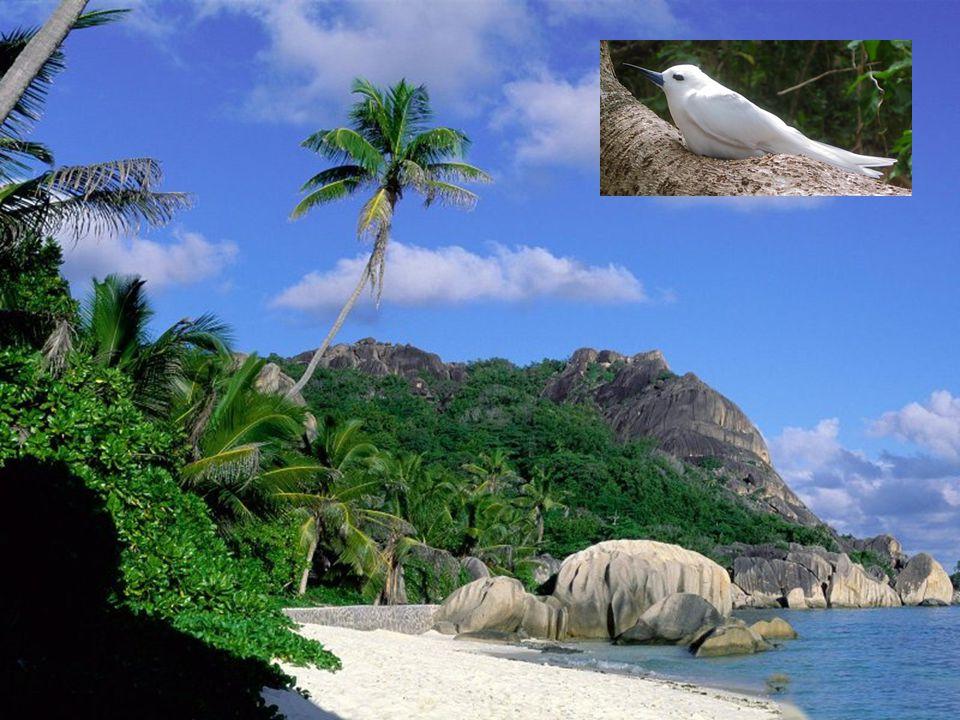 Stát na stejnojmenných ostrovech rozprostírajících se v Indickém oceánu mezi rovníkem a 10.