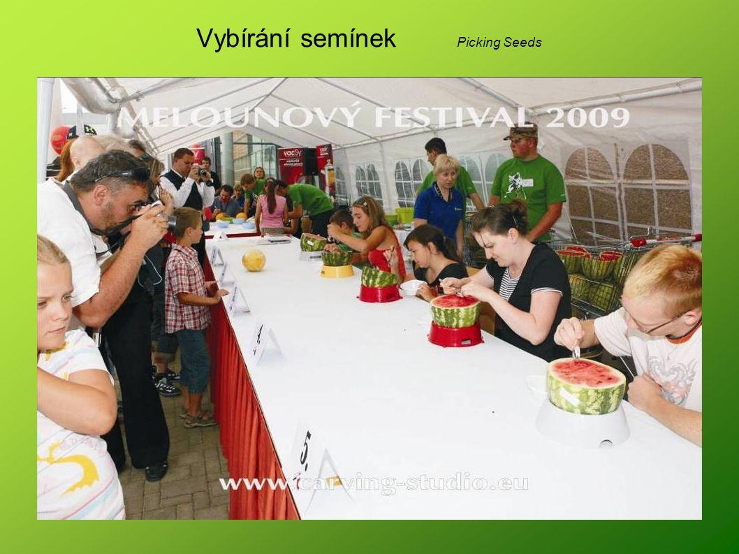 Vybírání semínek Picking Seeds