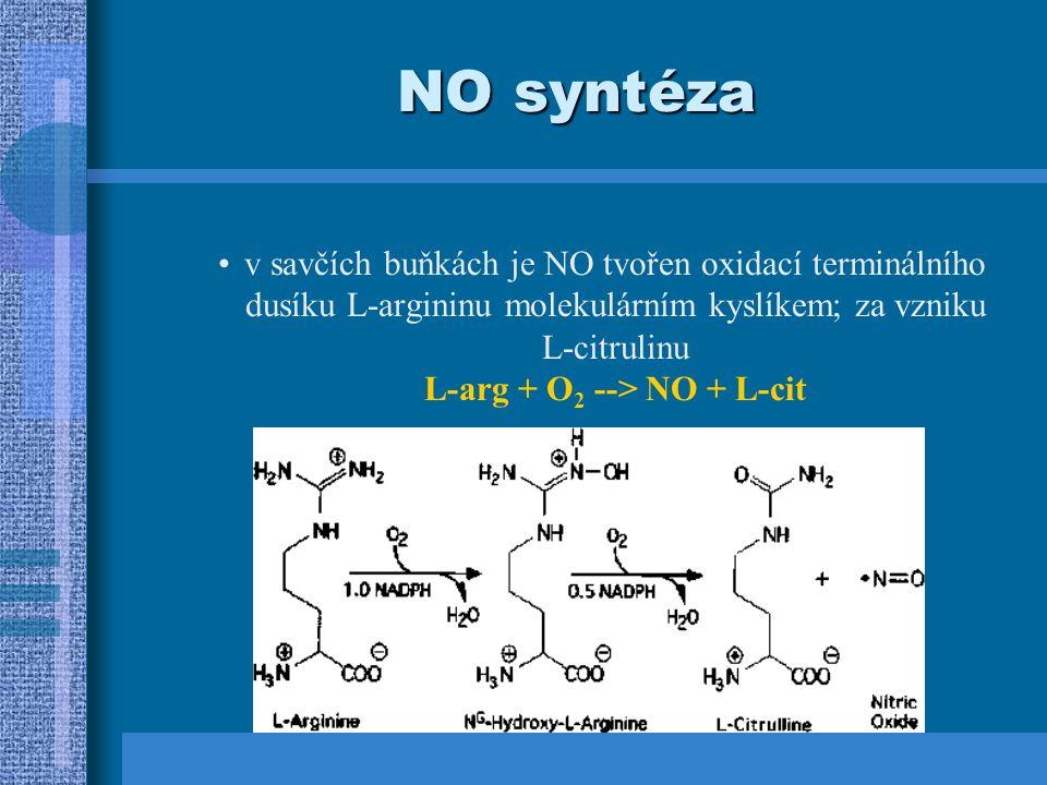 NO syntázy NOS celou komplexní reakci katalyzuje jediný enzym NO syntáza, která má 3 isoformy = VŠECHNY: obsahují v aktivním centru hem jsou aktivní jako homodimery jsou stereospecifické (D-arginin není substrátem)- jako kofaktory vyžadují: NADPH, 6(R)-5,6,7,8-tetrahydrobiopterin, FAD, FMN a kalmodulin