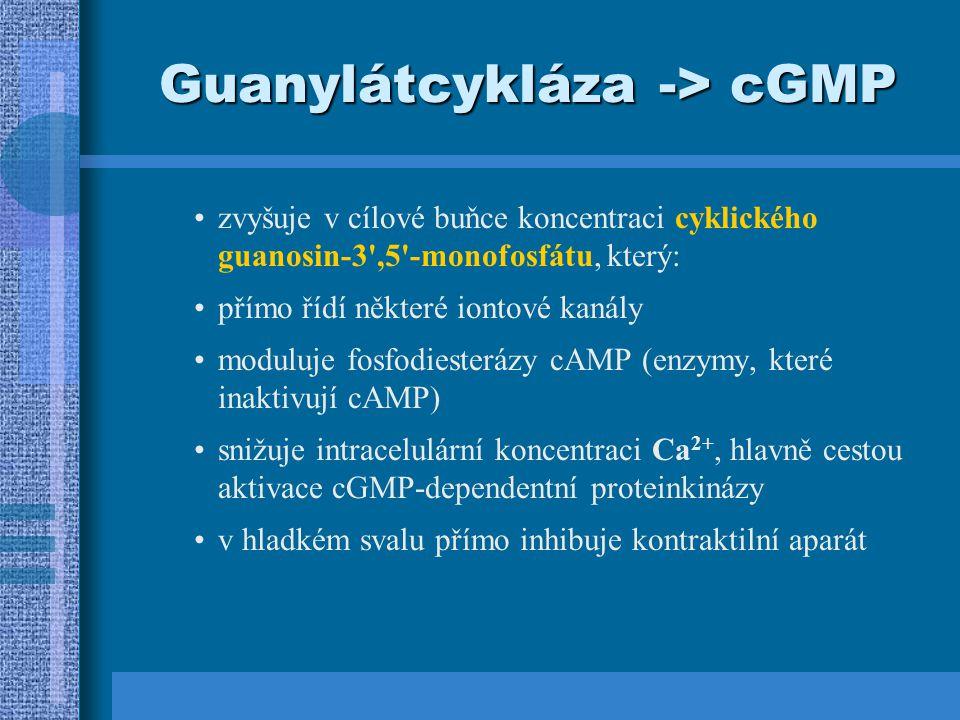 Guanylátcykláza -> cGMP zvyšuje v cílové buňce koncentraci cyklického guanosin-3 ,5 -monofosfátu, který: přímo řídí některé iontové kanály moduluje fosfodiesterázy cAMP (enzymy, které inaktivují cAMP) snižuje intracelulární koncentraci Ca 2+, hlavně cestou aktivace cGMP-dependentní proteinkinázy v hladkém svalu přímo inhibuje kontraktilní aparát