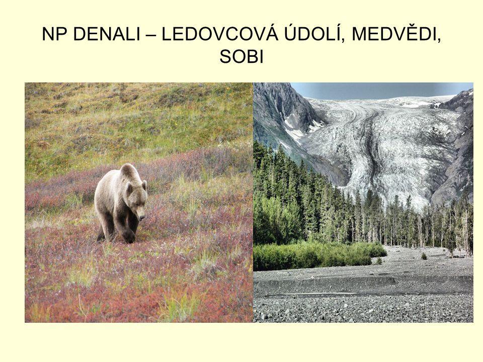 NP DENALI – LEDOVCOVÁ ÚDOLÍ, MEDVĚDI, SOBI