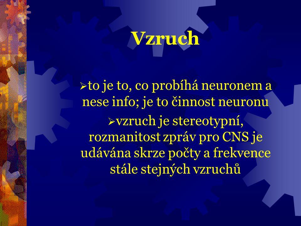 Vzruch  to je to, co probíhá neuronem a nese info; je to činnost neuronu  vzruch je stereotypní, rozmanitost zpráv pro CNS je udávána skrze počty a