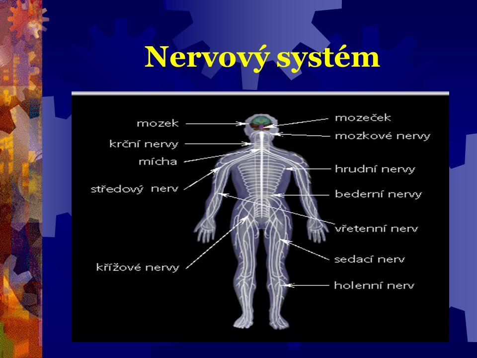 CNS  skládá se z šedé a bílé hmoty  chráněno obaly = pleny + mozkomíšní mok  4 mozkové komory  velká citlivost na nedostatek O2