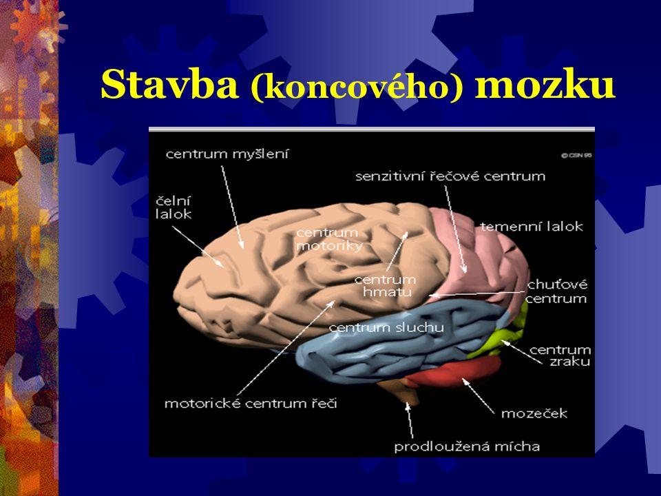 Dominance hemisfér  vlastnost jedné z hemisfér řídit určité fce.