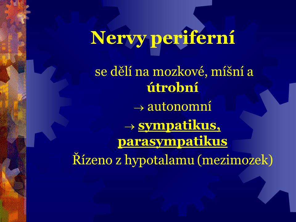 Nervy periferní se dělí na mozkové, míšní a útrobní  autonomní  sympatikus, parasympatikus Řízeno z hypotalamu (mezimozek)