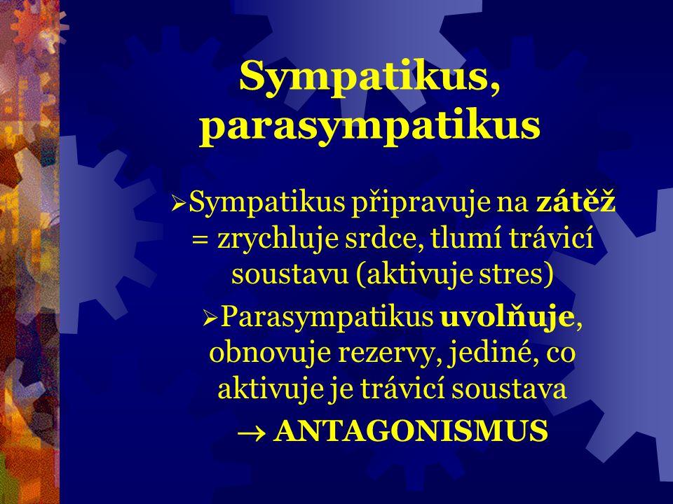 Sympatikus, parasympatikus  Sympatikus připravuje na zátěž = zrychluje srdce, tlumí trávicí soustavu (aktivuje stres)  Parasympatikus uvolňuje, obno