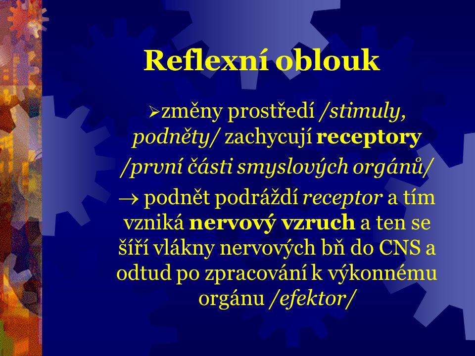  Reflex = základní funkční jednotka NS; je to reakce organismu na něco /podráždění/  Neuron = nervová bň, základní stavební jednotka NS; Neuron se skládá z těla a výběžků (= nervová vlákna) Mimořádně dráždivá bň!
