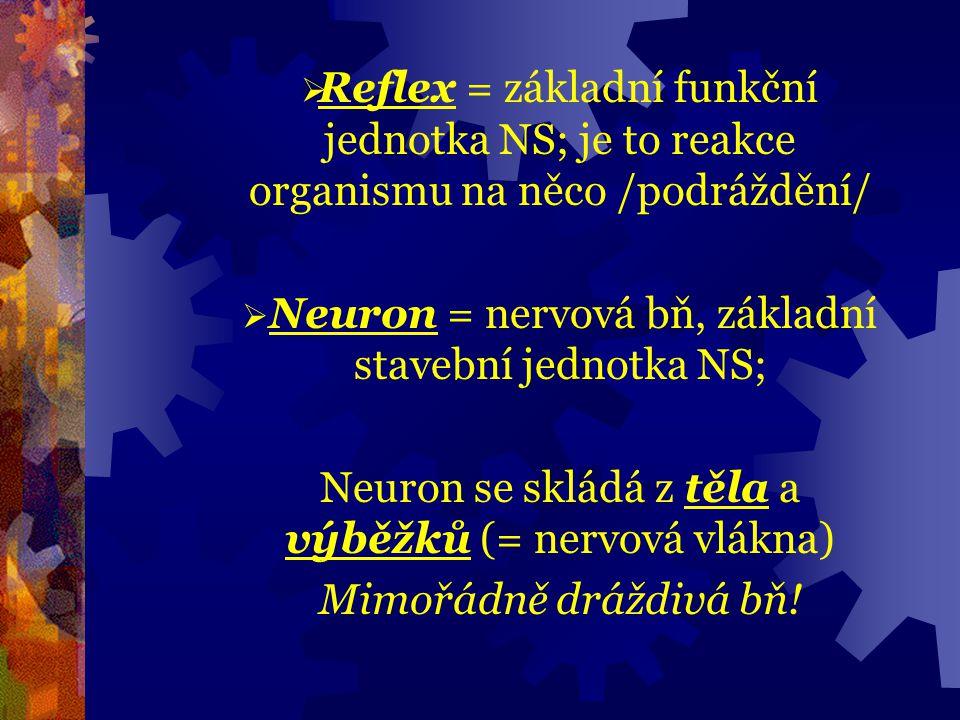 Stavba a fce neuronu Výběžky neuronu /vlákna/ jsou dvojího druhu:  vlákna, která přijímají jsou DENDRITY /větší počet, krátká, větví se/  od těla bň vede AXON/NEURIT/ /skrze ně se přijímají info/