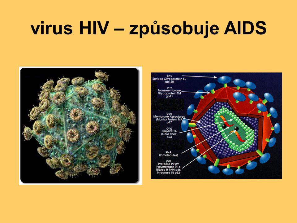virus HIV – způsobuje AIDS