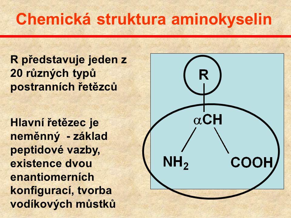 Enzymy jsou proteiny Proteiny jsou složeny z 20 kódovaných aminokyselin L-enantiomery