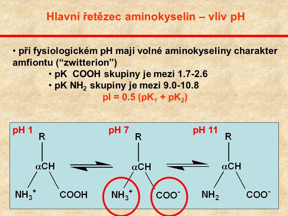 Chemická struktura aminokyselin R představuje jeden z 20 různých typů postranních řetězců Hlavní řetězec je neměnný - základ peptidové vazby, existenc