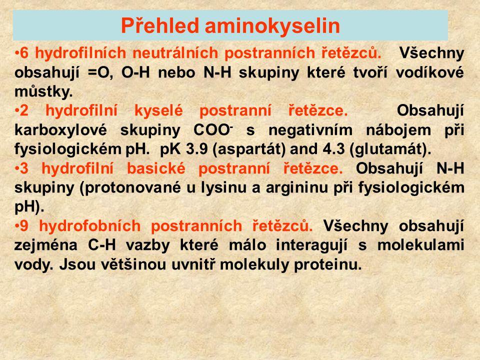 Klasifikace aminokyselin podle postranních řetězců hydrofobní hydrofilní - neutrální - kyselé - zásadité