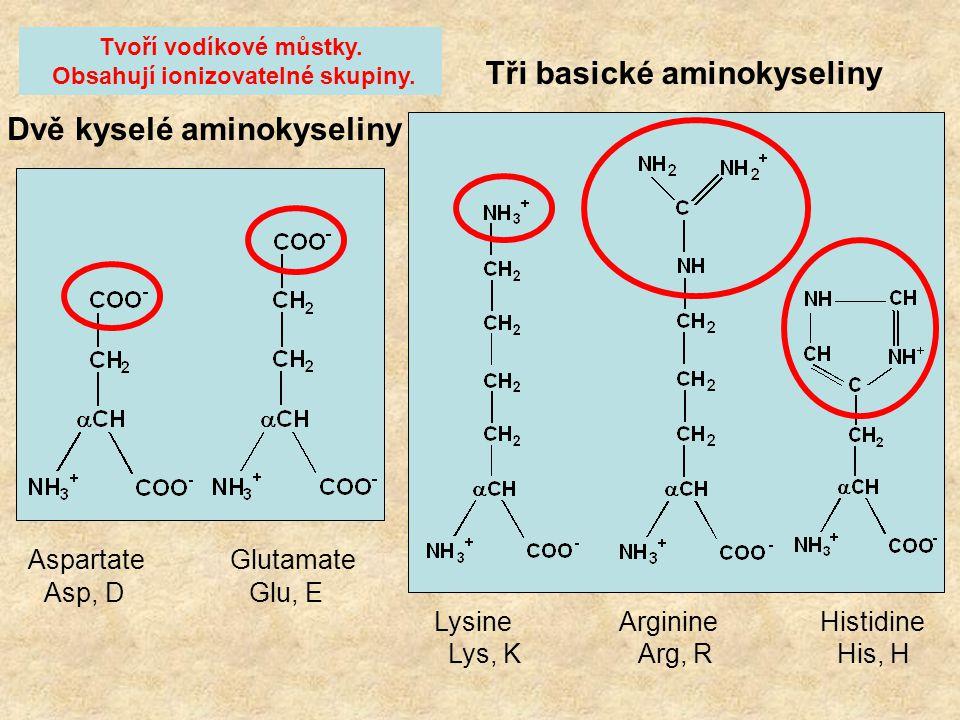 Šest hydrofilních neutrálních aminokyselin Serine Threonine Tyrosine Asparagine Glutamine Cysteine Ser, S Thr, T Tyr, Y Asn, N Gln, Q Cys, C Tvoří vod