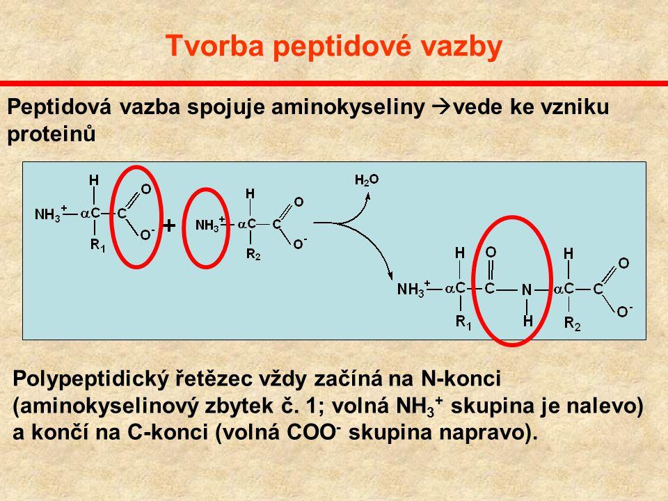 Devět hydrofobních aminokyselin Glycine, Gly, G Alanine, Ala, A Valine, Val, V Leucine, Leu, L Isoleucine, Ile, I Methionine, Met, M Phenylalanine, Ph