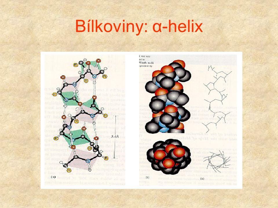 """Bílkoviny:  - helix Vlastnosti: (1) """"Tyčkovitý"""" tvar, postranní řetězce směřují ven (2) Všechny C=O a N-H skupiny z peptidických vazeb vytváří vodíko"""