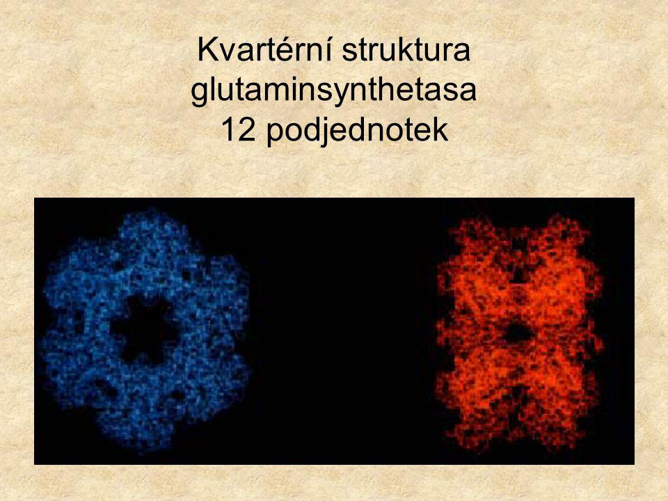 Terciární struktura - myoglobin