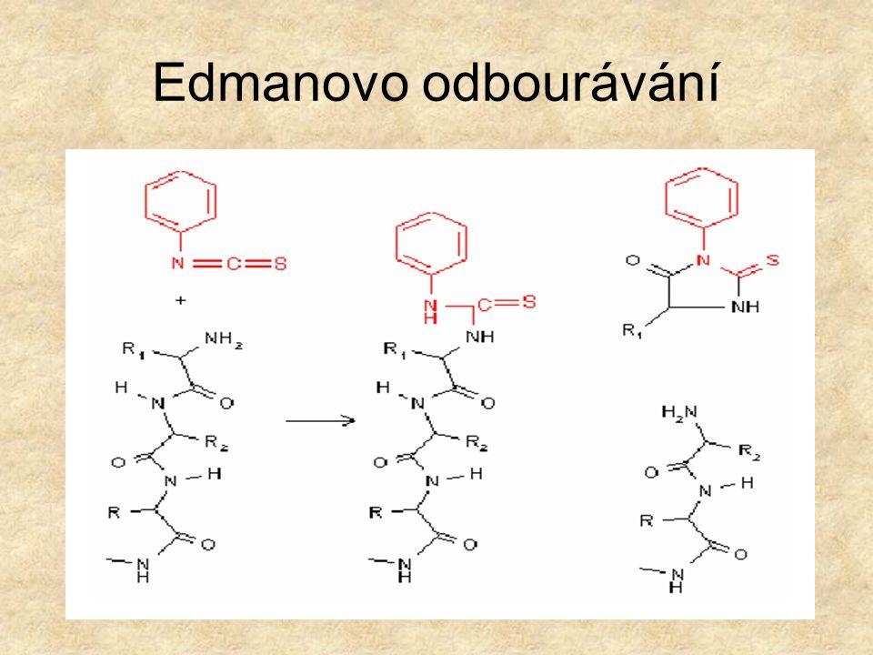Stanovení primární struktury Postupné odbourávání od N-konce Edmanův postup Použití fenylisothiokyanátu Možno analysovat peptidy do 60 - 70 aminokysel
