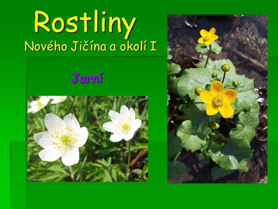 Rostliny Nového Jičína a okolí I Rostliny Nového Jičína a okolí I Jarní