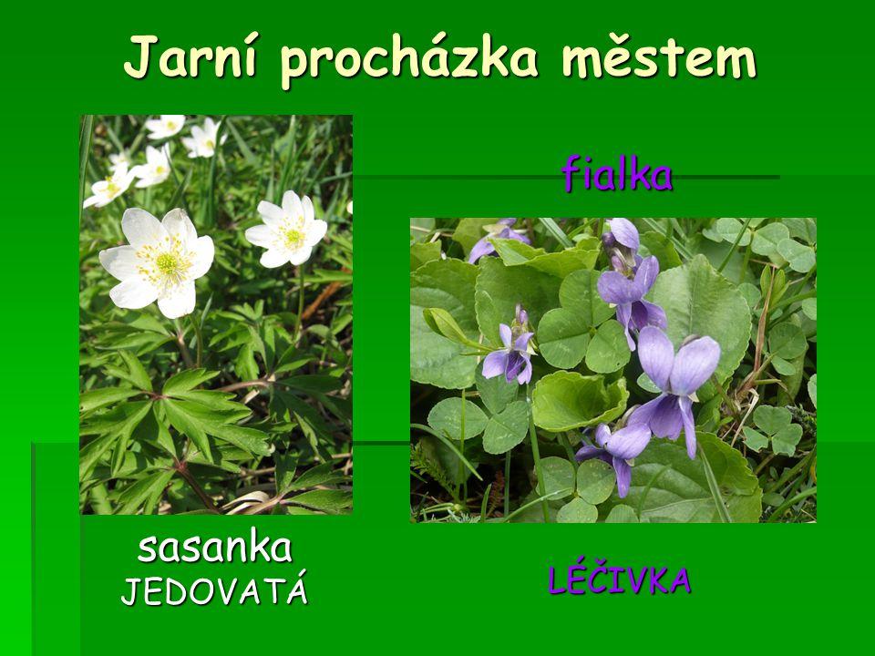 Zpracovala Zpracovala Jitka Žáková pro výuku vzdělávací oblasti Člověk a jeho svět ve 4.