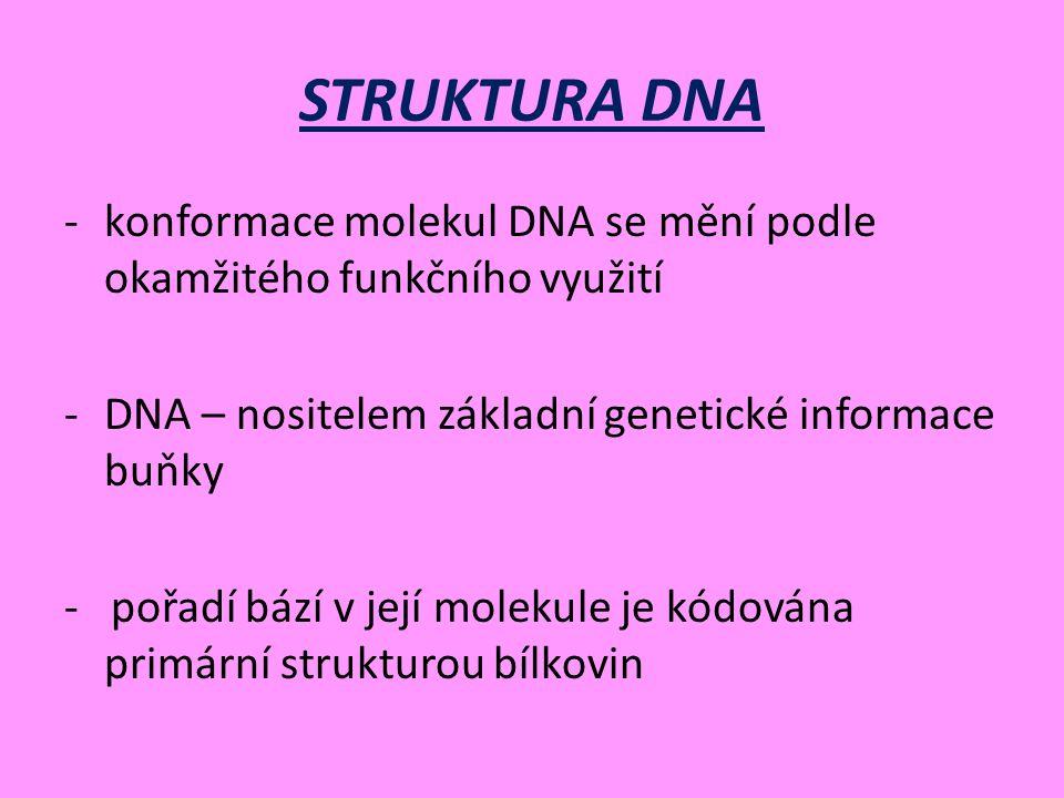 STRUKTURA DNA -konformace molekul DNA se mění podle okamžitého funkčního využití -DNA – nositelem základní genetické informace buňky - pořadí bází v její molekule je kódována primární strukturou bílkovin