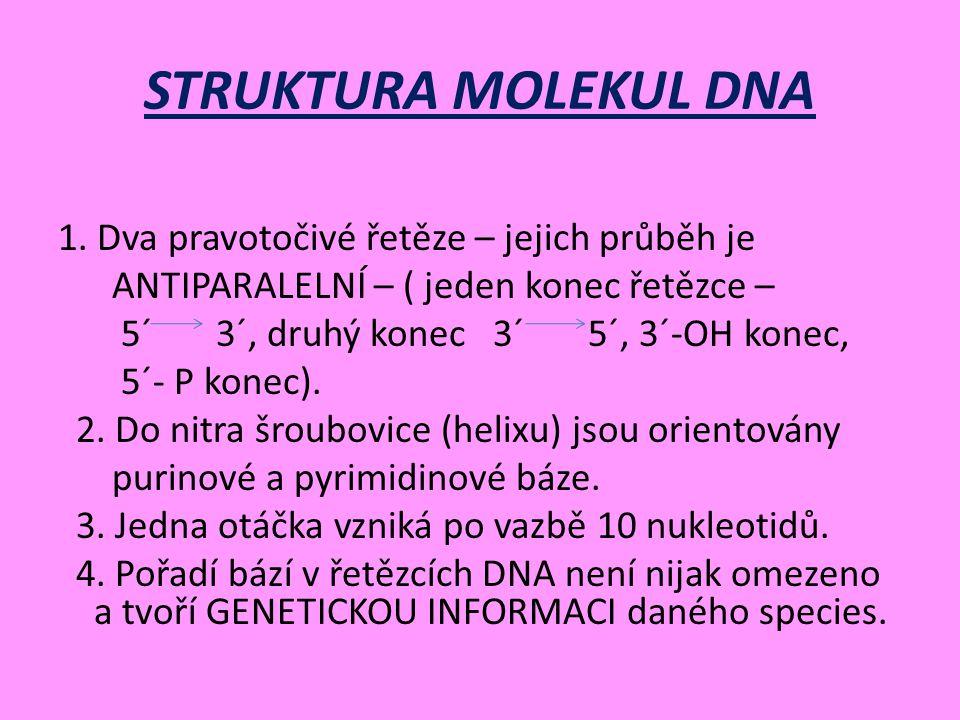 STRUKTURA MOLEKUL DNA 1.