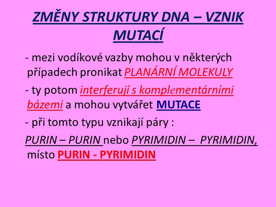 ZMĚNY STRUKTURY DNA – VZNIK MUTACÍ - mezi vodíkové vazby mohou v některých případech pronikat PLANÁRNÍ MOLEKULY - ty potom interferují s kompl e mentárními bázemi a mohou vytvářet MUTACE - při tomto typu vznikají páry : PURIN – PURIN nebo PYRIMIDIN – PYRIMIDIN, místo PURIN - PYRIMIDIN